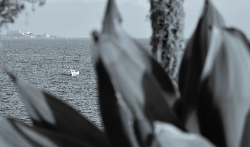 Beauty In Nature Black Black And White Blackandwhite Boat Canarias Canarie Canaries Canary Canary Islands Close-up Day Focus On Background Mode Of Transport Nature Nautical Vessel No People Outdoors Palm Palm Tree Sea Selective Focus Tenerife Water