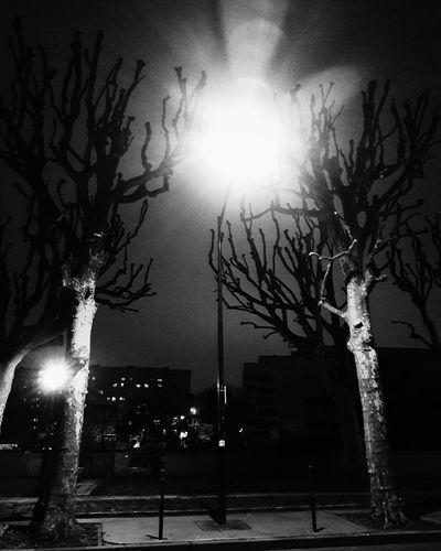 Tree Night Outdoors Illuminated Bare Tree Street Light Sky