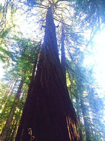 The redwood forest is my favorite place.