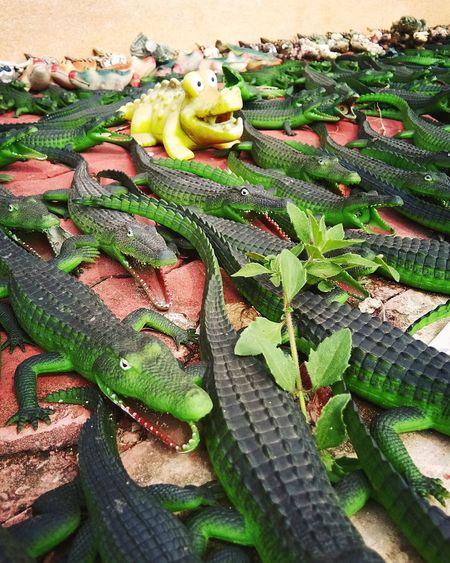 crocodile🐊 Crocodile จระเข้ Crocodile Reptile High Angle View Leaf Close-up Green Color Plant