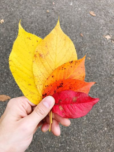 Hand Autumn Lifestyles Real People Human Hand Yellow Autumn Leaf Red Holding Human Body Part One Person Close-up Outdoors Day