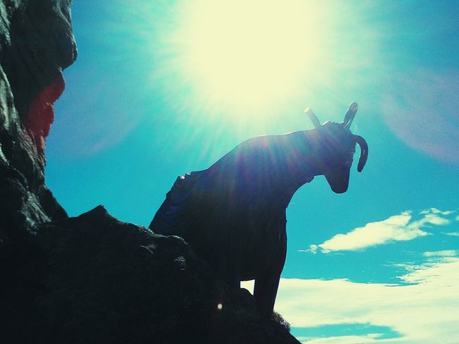 Hand or no hand...i could not ignore my camera today.... The sky was an amazing blue and the clouds set everything of nicely. Also the photos fit into my blue week 😁 This photo was taken on one of the highest points in our town, it's called Nanny goat hill. Bet y'all can't guess why 😂😂 Silhouette Adventure Courage Sky One Person Statue Nanny Goat Statue Man-made Structure Blue Photo Leisure Activity Different Ways Different Colours And Shades From The Other Side No Filter No Edit Just Photography The Pursit (no Edit, No Filter) From My Point Of View. Low Angle View Hill Climbing Photography Photography Fun, Outdoors Light And Shadow