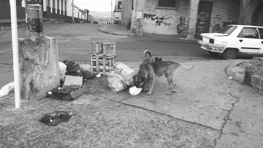 Desepsion Perros  Perros Callejeros Basura Basura En La Calle Dog Pets Animal Themes Domestic Animals One Animal Mammal Full Length Outdoors No People Day
