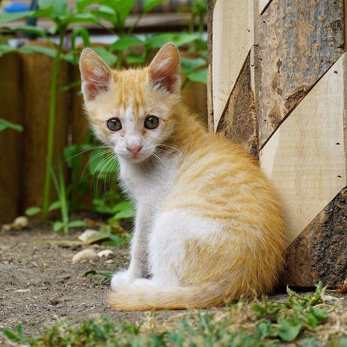 Portrait of kitten sitting outdoors