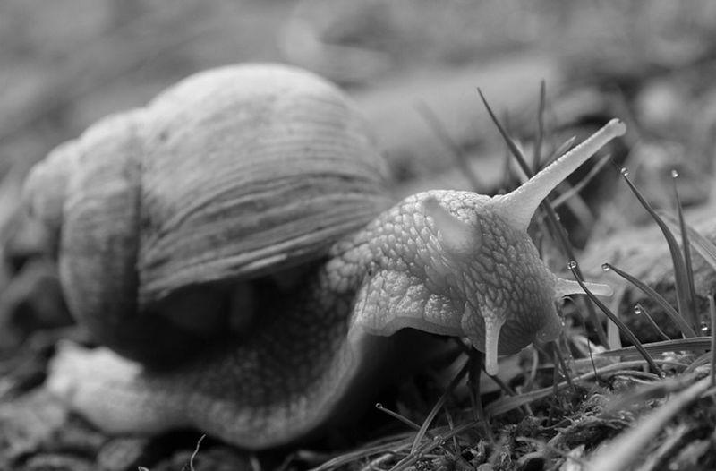 Schnecke Snail Snails Snail🐌 Weichtier Gastropoda Mollusca Wood Harz Animals Snails🐌 EyeEm Nature Lover Cubefotografie