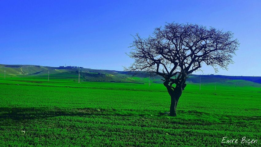Photo #photoart #photography #photooftheday #green #love #color #picoftheday Pic Tree Rural Scene Agriculture Field Tea Crop Green Color Single Tree