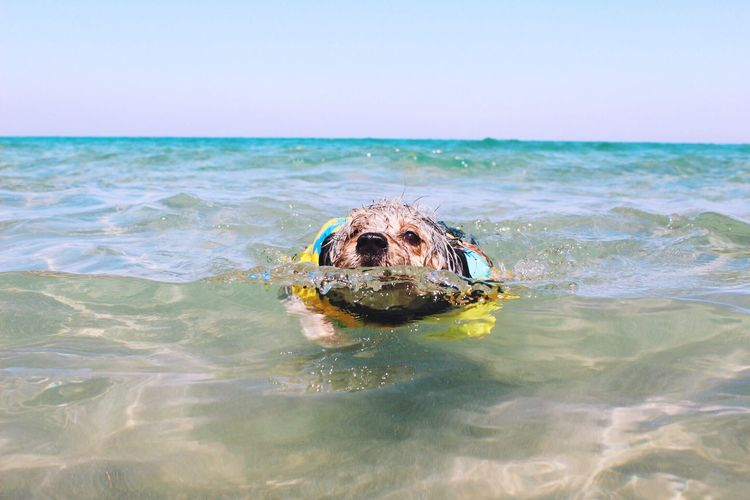 Dog swimming in sea against sky