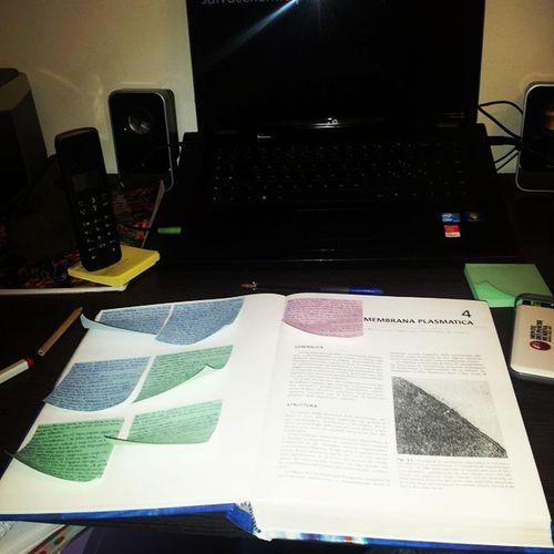 alla francesco sole ci siamo combinati. Istologia Help Cells Tessue postit sole boring studing