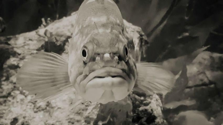 Fish Close-up One Animal Underwater Nature UnderSea Aquarium Baltimore Baltimore Aquarium Creamtone Lightroom Mobile Note5photography