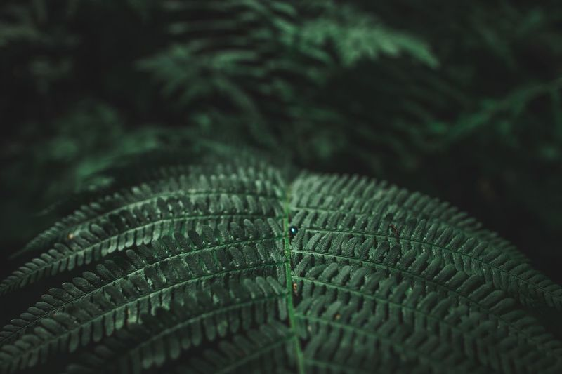 Ben Wyssen Close-up Green Color No People Leaf Selective Focus Pattern Plant Part Fragility Day Backgrounds Plant Beauty In Nature Growth Feather  Fern Focus On Foreground Nature Full Frame Natural Pattern Vulnerability