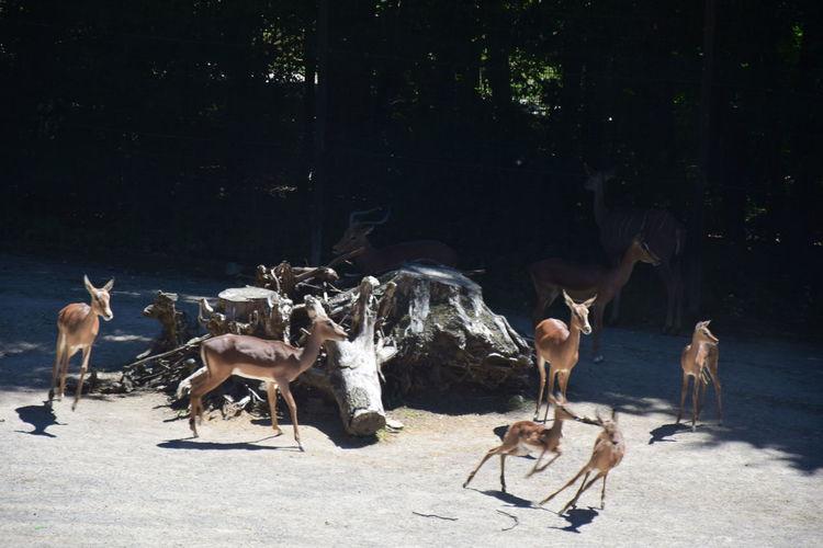 EyeEm Selects Deer Group Of Animals Herbivorous
