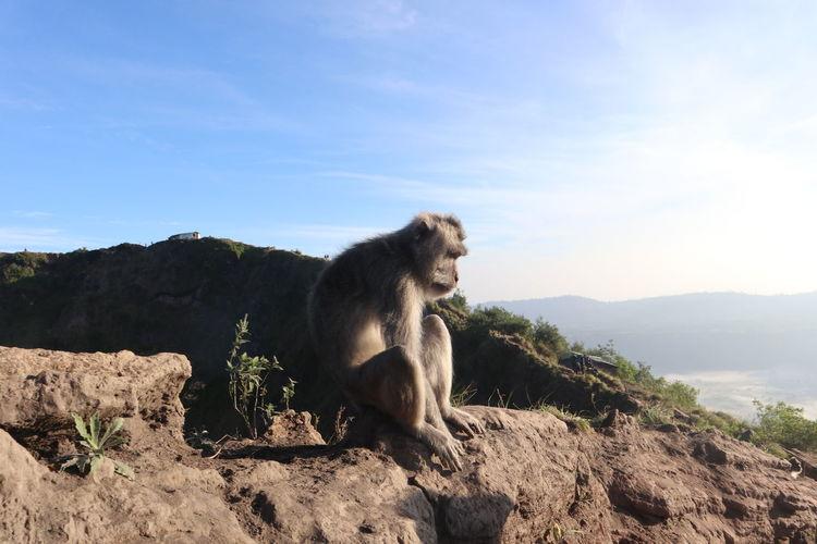 Monkey sitting on rock against sky