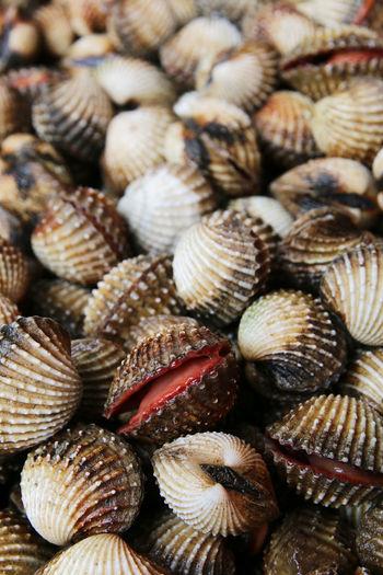 Full frame shot of fresh clams