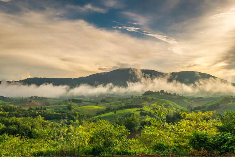 Field Rural Scene Nature Growth Hill Farm Freshness Valley Morning Cloud - Sky Landscape Dramatic Sky Landscaped Tree Scenics Sky Sunlight Beauty In Nature Fog Tree Forest Mountain No People