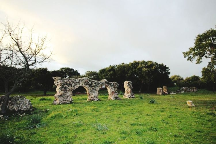 parco romanico cabu abbas Parco Archeologico Archeology Archeologia EyeEm Best Shots EyeEm Nature Lover Tree Ancient Old Ruin History Monument The Past Memorial Sky Grass Architecture Tombstone