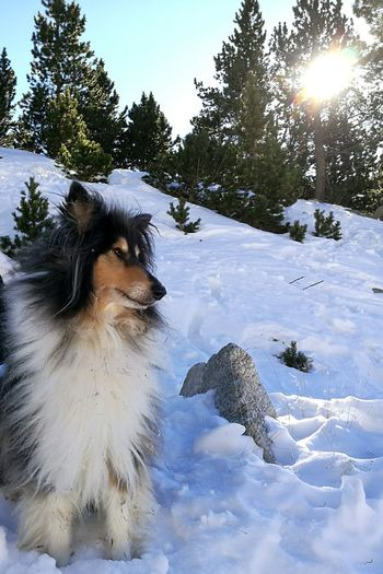 Day Firstpost  2017 New Year Snow Winter Mountains One Animal Animal Animal Themes Cold Temperature Nature Tree Clear Sky Sky Nature Beauty In Nature Adventure Sunlight