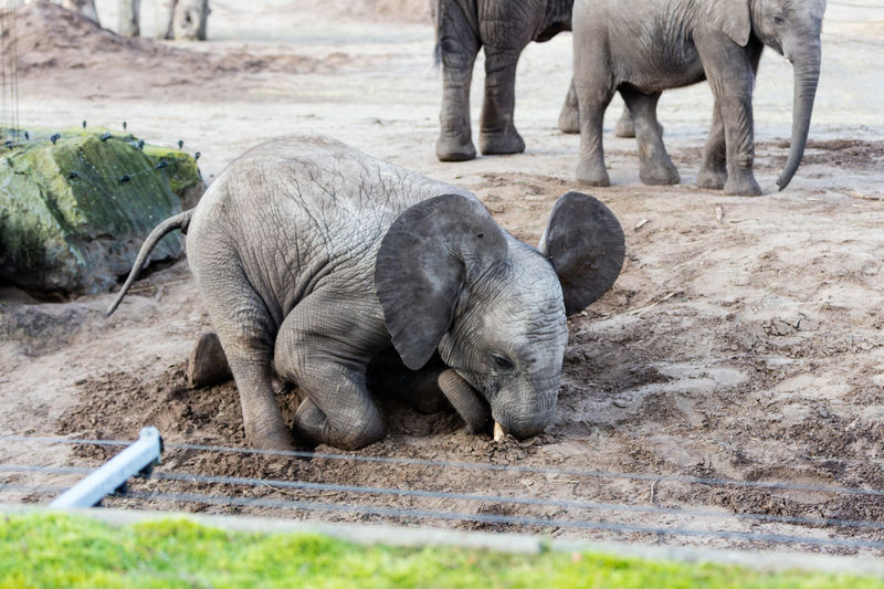 High Angle View Of Elephant Digging Sand