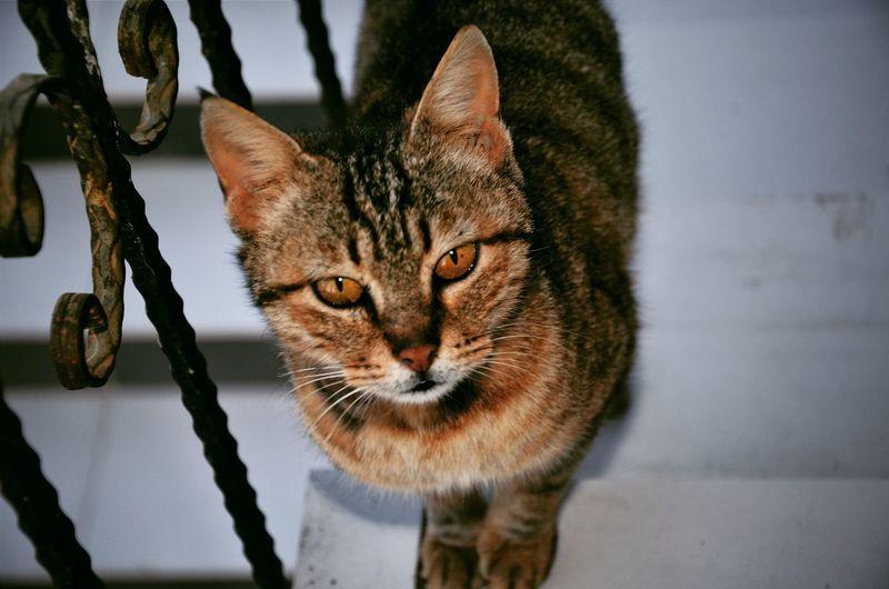 Cat Catoftheday
