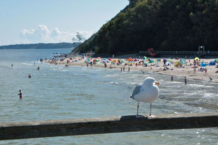 Beach Beauty In Nature Day Large Group Of People Leisure Activity Lifestyles Mixed Age Range Mountain Nature Outdoors People Real People Rügen Rügen Lovers Sea Seagul Seagull Seagulls Seagulls And Sea Sky Travel Vacation Time Water