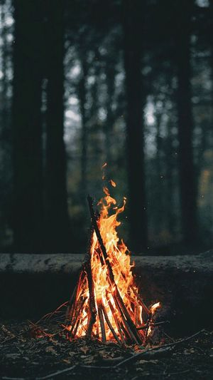 Campfire Burning In Forest At Dusk