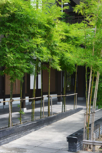 View of trees and plants growing by building