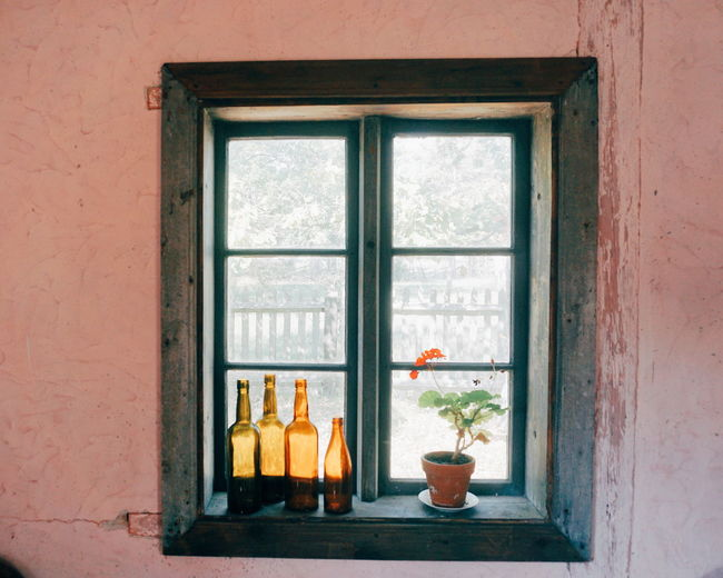 Bottles and potted plant on window sill