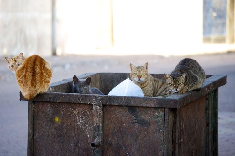Bin Cats Animal Themes Cat Domestic Animals Domestic Cat Feline Mammal No People Outdoors Pets First Eyeem Photo