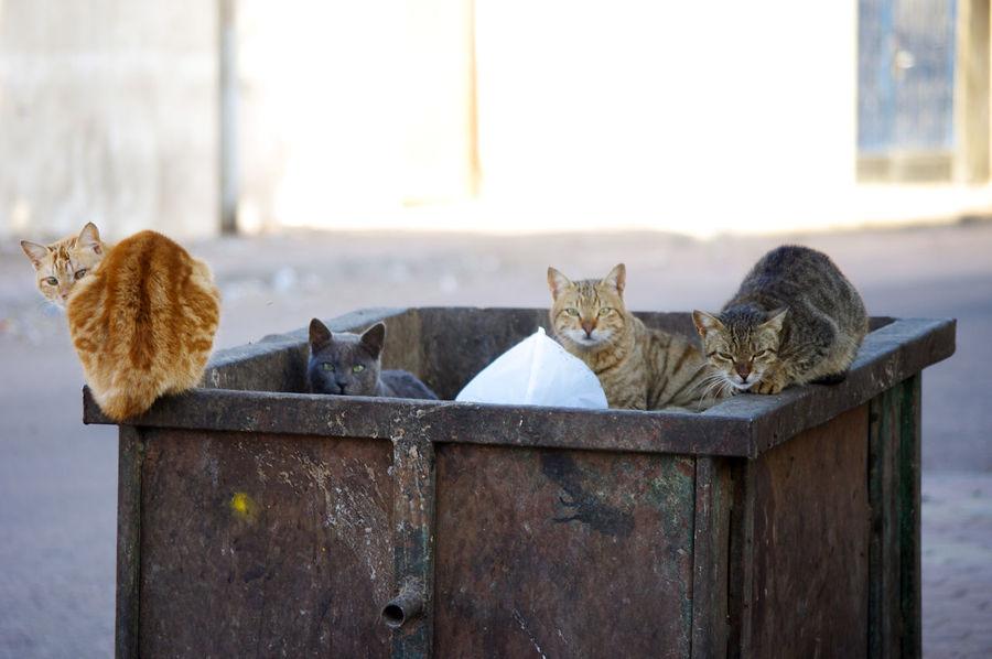 Bin Cats Animal Themes Cat Domestic Animals Domestic Cat Feline Mammal No People Outdoors Pets First Eyeem Photo
