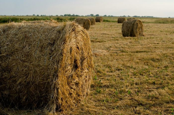 Hay Hay Bales Fieldscape Landscape Agriculture Countryside Countryside Scene Outdoors Fields Eye4photography