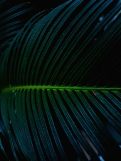 Abstract Backgrounds Green Color Black Background Close-up No People Nature Plant Leaf