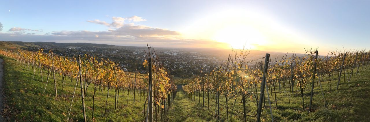 Weinberge Heilbronn Baden-Württemberg  Heilbronn Weinberg Growth Nature Tranquility Tranquil Scene Sun Field Beauty In Nature No People Sunset Landscape