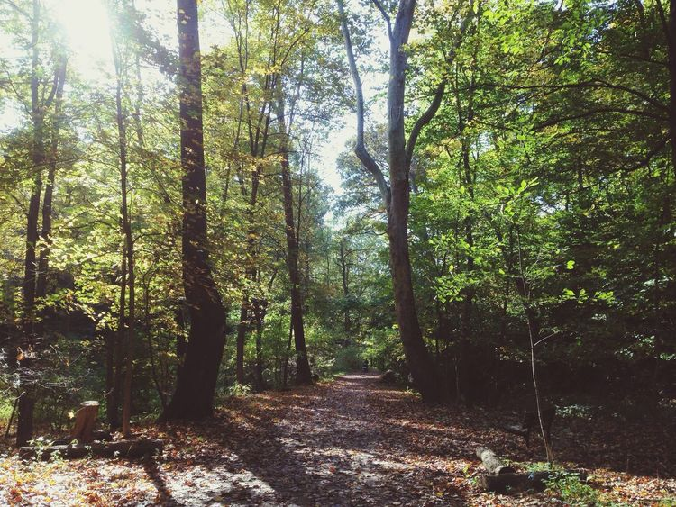 Morning Hike Walking Around Forest