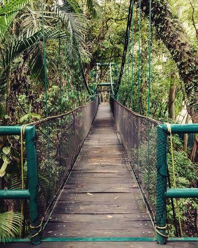 Cruza el amor por el puente. Usa el amor, usa el amor como un puente. (Cerati). Puente Villahermosa Mexico Travel Amazing Bridge HID Nature Museolaventa Mextgram City Explorando Cerati