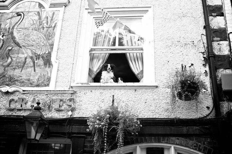 Dog Black And White Street Photography Monochrome