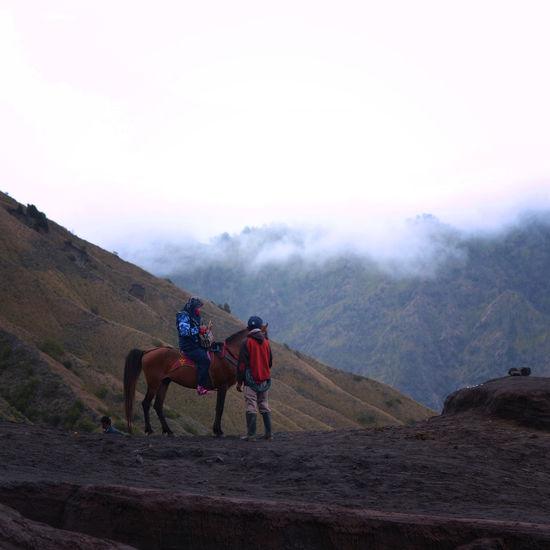 Horses riding horse