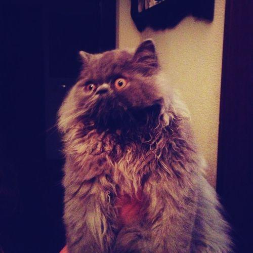 Thisisnotmycat