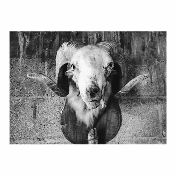 Transfer Print Domestic Animals Looking At Camera Mexicanphotographer Black And White Blackandwhite Photography Looking At Camera