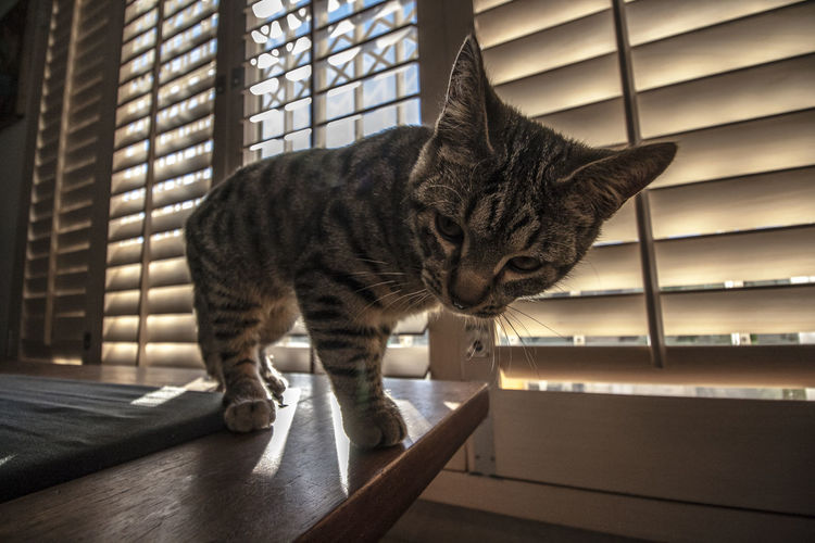 What lens do you have there? Cute Pets Animal Themes Close-up Cute Cute Cats Day Domestic Animals Domestic Cat Feline Indoors  Light And Shadow Mammal No People One Animal Pets Wide Angle Window