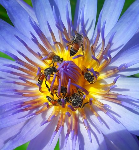 animal flower Flower Head Flower Bee Pollination Yellow Multi Colored Petal Insect Stamen Uncultivated