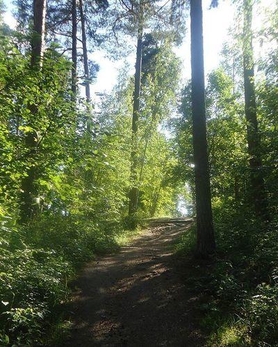 Pyynikki Metsä Forest Foret Bosque Nature Luonto Naturaleza Tampere Tamperelove Igerstampere Finland Suomi Fotofanatics_nature_ Naturelovers Trees Puut Arbres Arboles