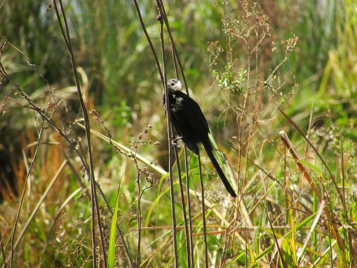 Bird Perching Butterfly - Insect Insect Animal Themes Close-up Grass Plant Arachnid Damselfly Thistle Cattail Spider Web Spider Growing Blooming Web Cocoon Fungus Young Plant Arthropod Jumping Spider Bumblebee Spiked Chachoengsao Prey Animal Leg Barrel Cactus Cactus Beetle Spiky