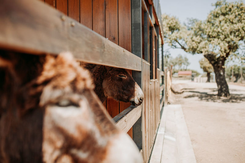 Donkey Donkeys Stable Farm Farmland Farm Life Livestock Mammal Animal Themes Domestic Animals Animal Domestic Pets Day One Animal No People Vertebrate Nature Animal Body Part Selective Focus Outdoors Cattle Architecture Close-up Agriculture Herbivorous Animal Head