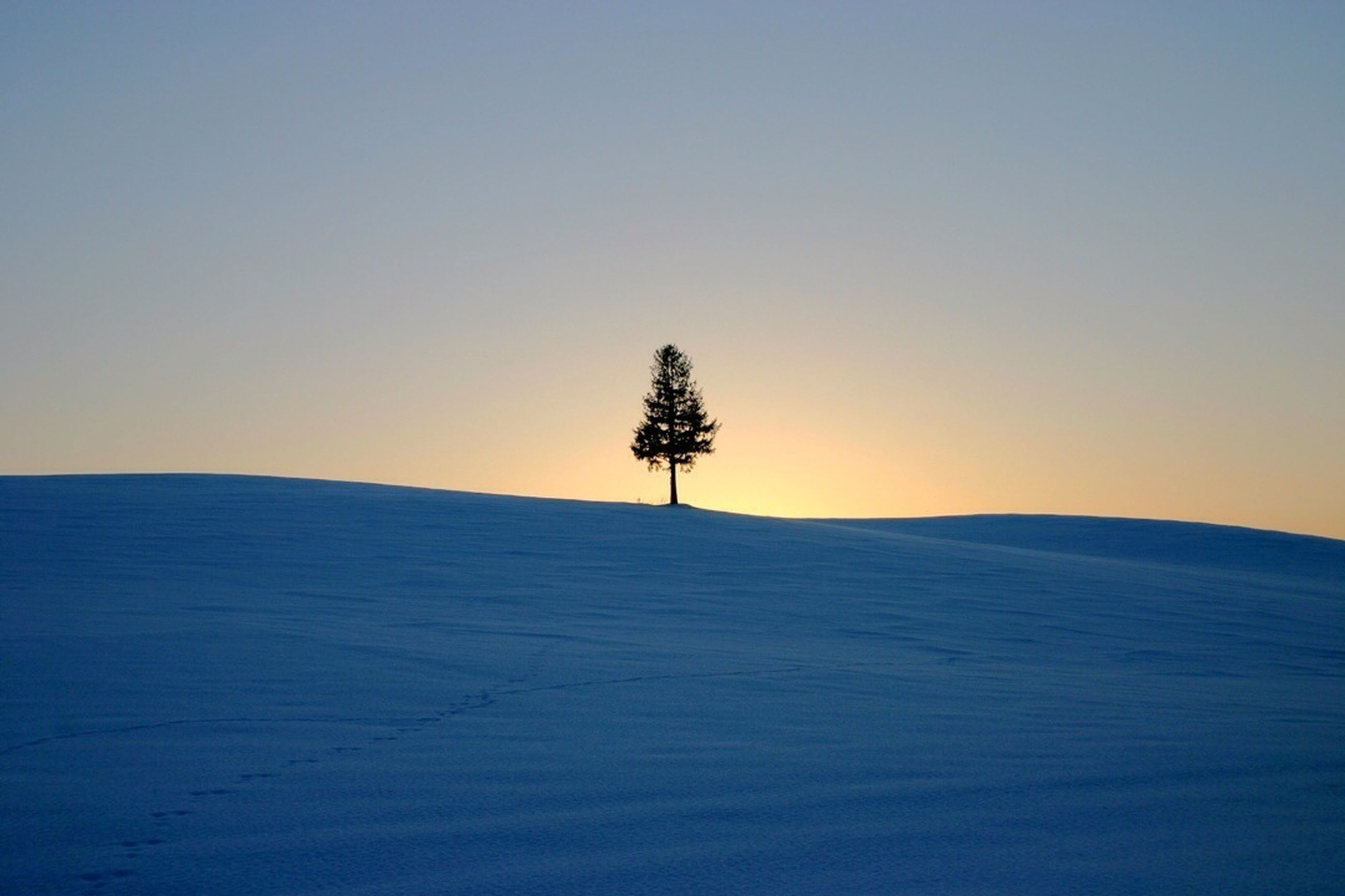 tranquil scene, tranquility, clear sky, landscape, scenics, copy space, beauty in nature, nature, tree, snow, bare tree, cold temperature, non-urban scene, field, horizon over land, winter, silhouette, sunset, remote, solitude