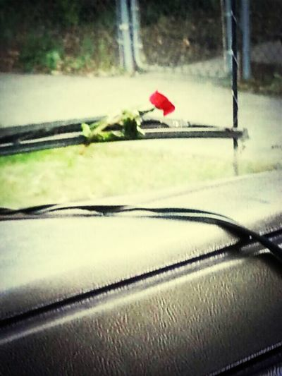 someone left a flower under the wiper?? SoSweet Feelloved lol Maybeitwasjustthewind