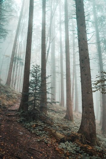 View of trees in forest during foggy weather