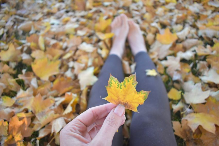 Admiring the beauty of nature, leaves changing colors Earth connection & season concept Changing Seasons Changing Colors Colors Of Autumn Fall Colors Pile Of Leaves Woman Autumn Barefeet Barefoot Beauty In Nature Close-up Fallen Leaves Healthy Lifestyles Holding Leaf Leaf Leaf Pile 🍂 Leaves Looking At Leaves Maple Leaf Nature Nature_collection Outdoors Season  Seasonal Concepts Sitting On The Ground