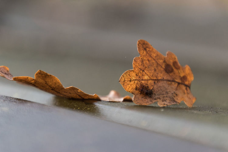 Leaves on a table in park in Italy Autumn Foglie IT Italia Autunno  Leaves Table Tavolo
