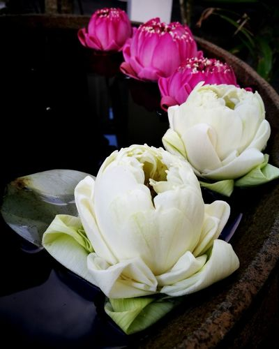Freshness Day Close-up Pink Color Flower Flower Collection Photography Thailand Thai Style Lotus Flower Lotus Flowers Gentleness Nice Day Graceful Be Graceful Composed Composed By Nature EyeEmNewHere