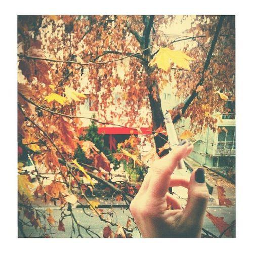 Buralar hala Sonbahar Aralık Ankara Agac Yaprak Yağmur Huzur Tree Autumn Ankar Farabi Cigarette  Hands Leaf Instacool Instamood Eyesofmoon Rainy Beautiful days ...