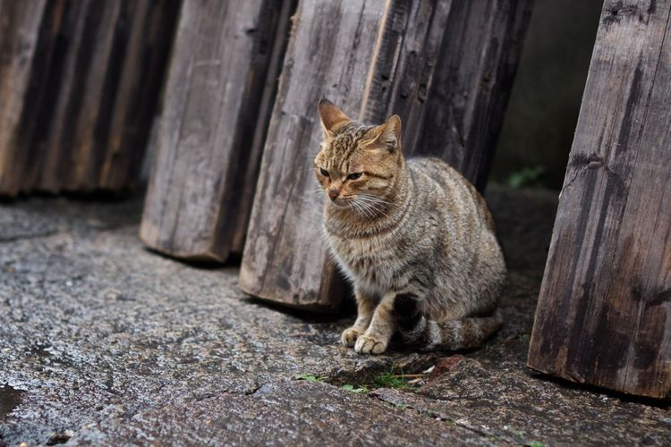 Cat EyeEm Selects Domestic Cat One Animal Animal Themes Domestic Animals Mammal Feline Pets Wood - Material No People Sitting Outdoors Day